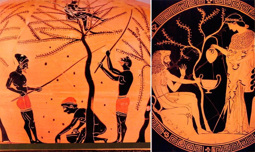 CennetteAntik Yunan'da zeytin ağacına büyük önem veriliyordu. Zeytin ağacıyla ilgili efsaneye konu olan Athena ve Poseidon